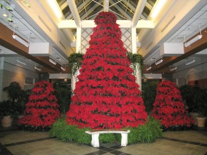 Columbus Franklin Park Conservatory Poinsettia Christmas Tree